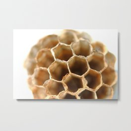 Honeycomb vespiary on white Metal Print