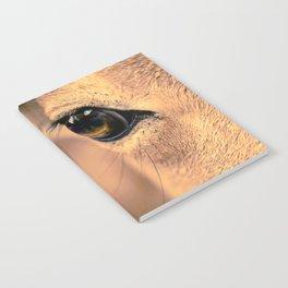 An Eye Notebook