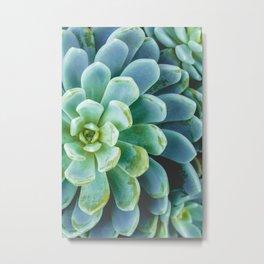 Succulent 01 Metal Print