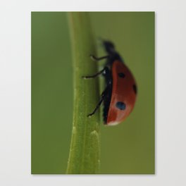 Ladybird on a Flower, macro photography, home, still life, fine art, animal love, nature photo Canvas Print