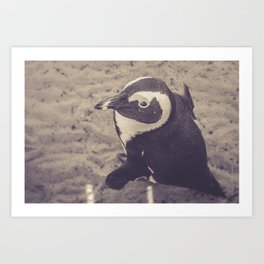 Adorable African Penguin Series 2 of 4 Art Print
