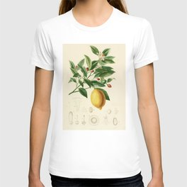 Vintage Lemon Tree Illustration T-shirt