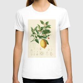 Vintage Lemon Tree Illustration T-shirt