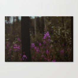 Purple North Canvas Print