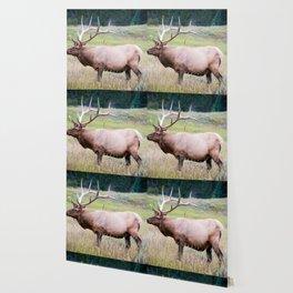 Yellowstone Wallpaper