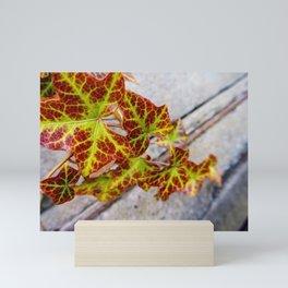 Transforming Vine Mini Art Print
