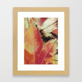Autumn Maple Abstract Framed Art Print