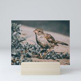 Summer Sparrow. Bird Photograph Mini Art Print