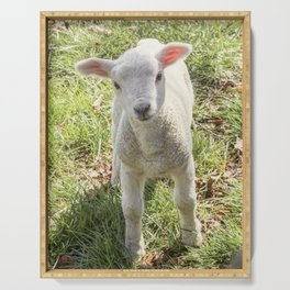 Cute baby spring lamb Serving Tray
