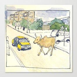 dakar cow Canvas Print