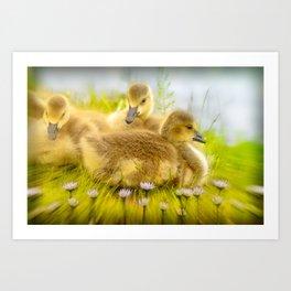 Goslings Art Print