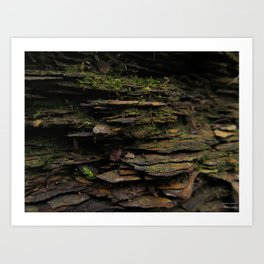 Between the Layers Art Print