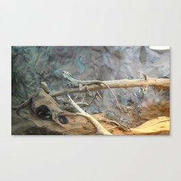 lizzards Canvas Print