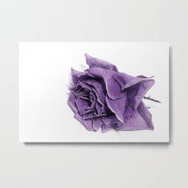 Beautiful Purple Rose on White Background Metal Print