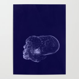 Galaxy Bobtail Squid Poster