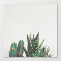Canvas Prints featuring Cactus & Succulents by Cassia Beck