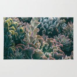 Mornings In The Succulent Garden #1 Rug