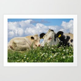 Two lazy cows @ Zwarte Haan (The Netherlands, Friesland) Waddenzee Art Print