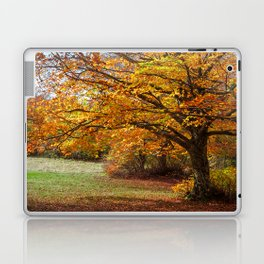 Colorful autumn in the forest of Canfaito park, Italy Laptop & iPad Skin