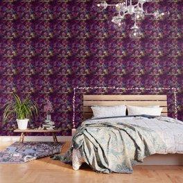 Cats  New colour No. 1 popularity 317 Wallpaper