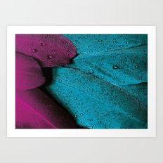 MAGENTA AND TURQUOISE FEATHER CLUSTER PATTERN Art Print