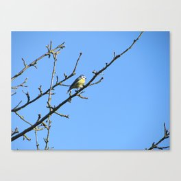 Blue Tit in the garden Canvas Print