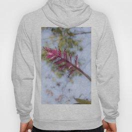 Pink Bromelia Hoody