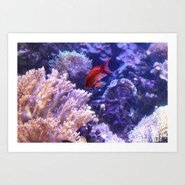 Lonely Fish Art Print