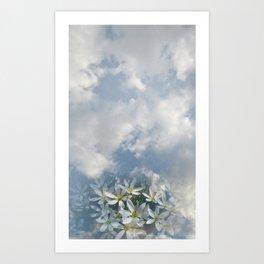 Window Curtains - Morning Fresh Art Print