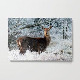 Lone Deer In Winter Metal Print