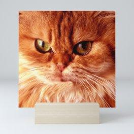 Orange Cat Mini Art Print
