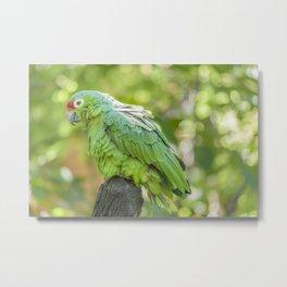 Tropical Parrot at Zoo, Guayaquil Metal Print