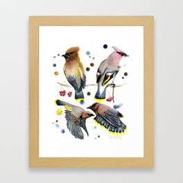 Cedar Waxwing Study Framed Art Print