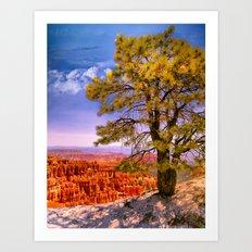 Ponderosa Pine. Bryce Canyon National Park, Utah Art Print