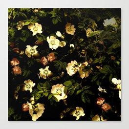 Floral Night I Canvas Print