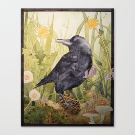 Canuck the Crow Canvas Print