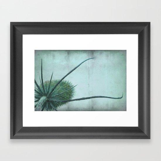 wild teasel Framed Art Print