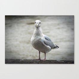 Seagull Canvas Print