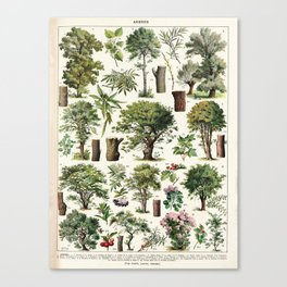 Adolphe Millot - Arbres A - French vintage botanical poster Canvas Print