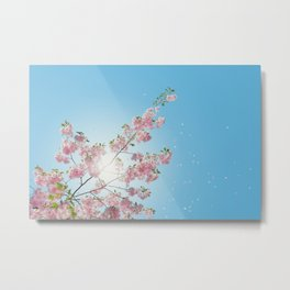 Cherry Blossoms Against the Blue Sky Metal Print