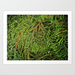 Boughs Art Print