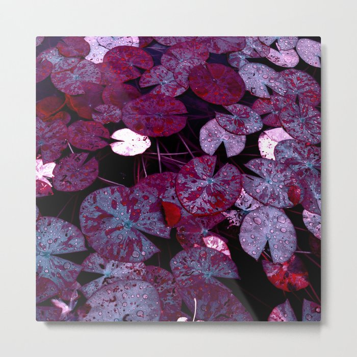 lily pads XII Metal Print