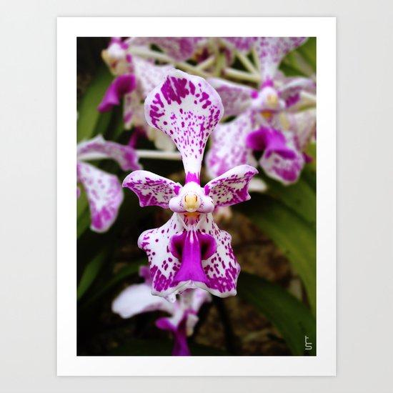 Wild Orchid (Pink & White) Art Print