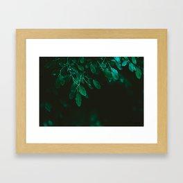 Huckleberry Leaves Framed Art Print