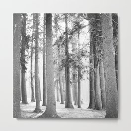 Black and White Pine Forest Metal Print