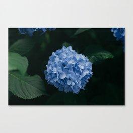 Blue Hydrangea Flower Canvas Print
