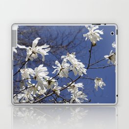 Star filled sky (Star Magnolia flowers!)      Edit Laptop & iPad Skin