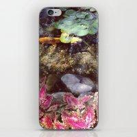 cincinnati iPhone & iPod Skins featuring Koi of Cincinnati by Megan Braaten