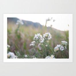 Colorado Wildflower #526 Art Print