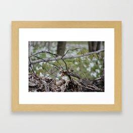 Song Bird's Mate pic 1 Framed Art Print